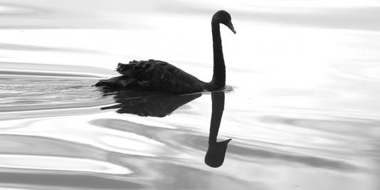 Migrating with Black Swans: Climate Risk and Retirement Planning by John B. Mitchell